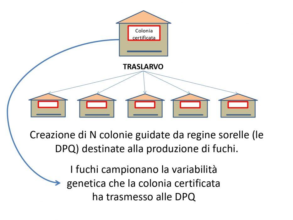 ADA_Pagnacco_page-0003